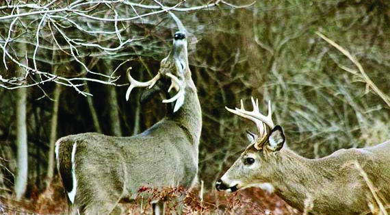 Despite some delays, Mayor Bob McVaugh hopes to start the deer culling by December.