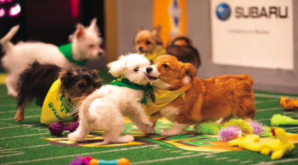 Exciting Puppy Bowl Makes Up for Underwhelming Super Bowl