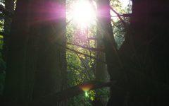 Sun shining through trees in Little Pine State Park, Pennsylvania.