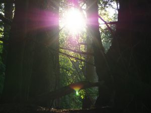 Sun shining through trees in Little Pine State Park, Pennsylvania.